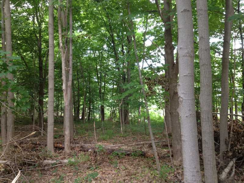 ORGAN HILL RD La Grange, NY 12540 - MLS #: 374539